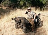 California Wild Boar